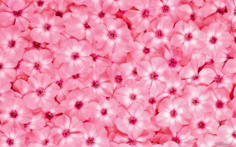 Wallpaper   Flower wallpaper   Beautiful Flower wallpaper
