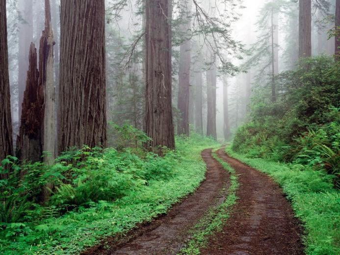 Best Nature Wallpaper Redwood National Park 701671 Nature