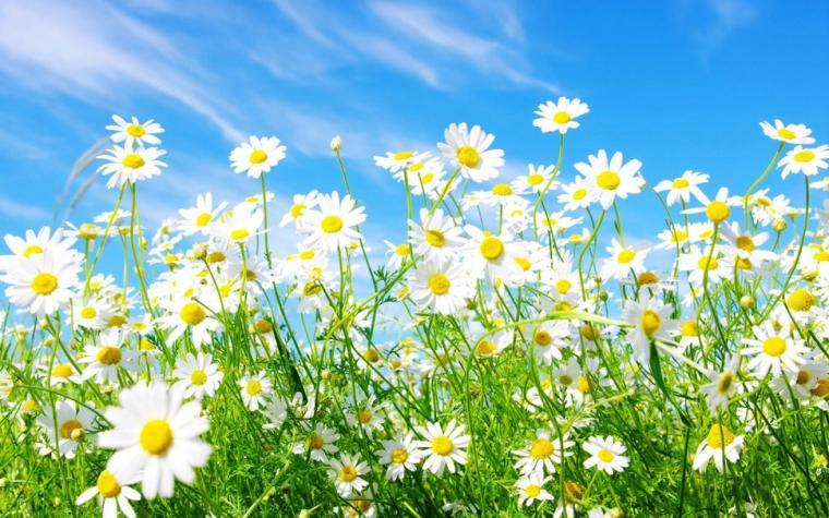widescreen daisy media spring wallpaper   ForWallpapercom