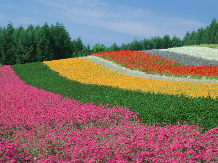 World Most Beautiful Flowers Colour Full HD Desktop Wallpapers