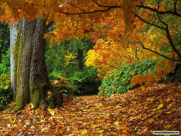 fall of autumn leaves wallpaper One From The Vaults