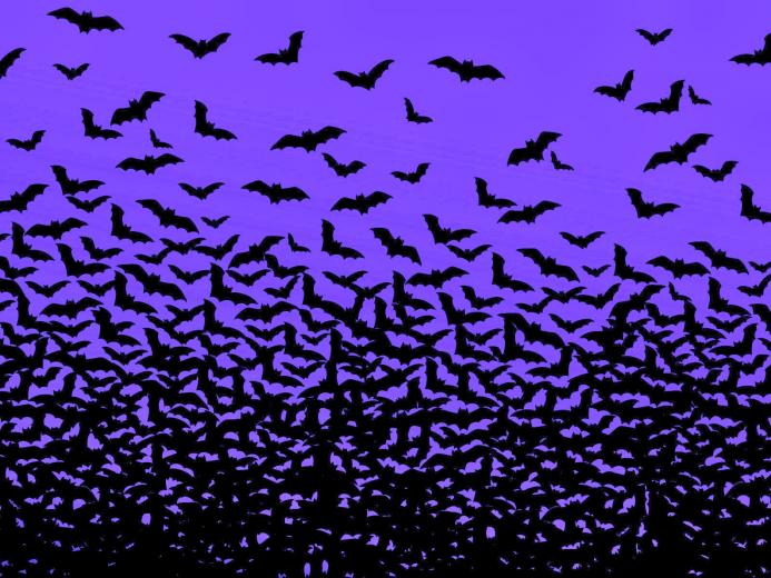 real bats flying in night bats wallpaper widescreen bat pictures