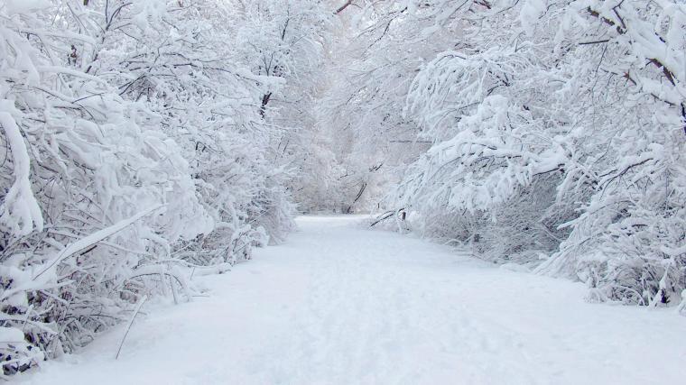 Winter Snow Wallpaper Hd 19202151080 23180 HD Wallpaper Res