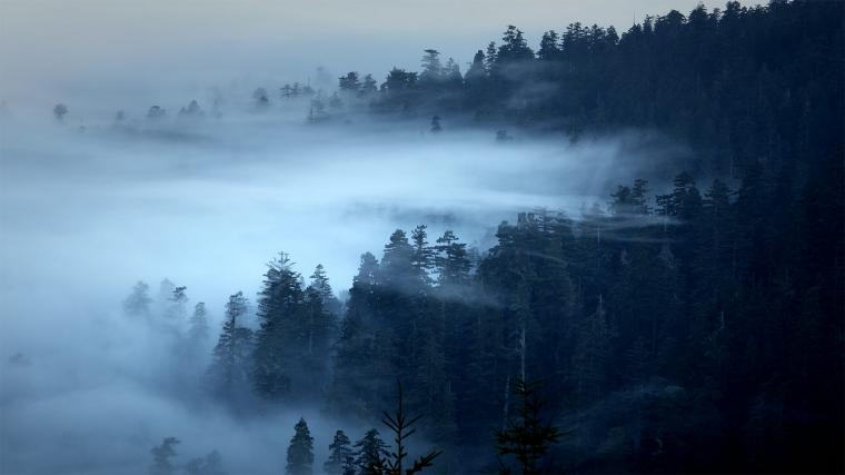 The Redwood National and State Parks of California Bing Gallery