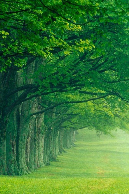 30 Nature Wallpapers for iPhone iPhone 5 Pictures Wallpapers and