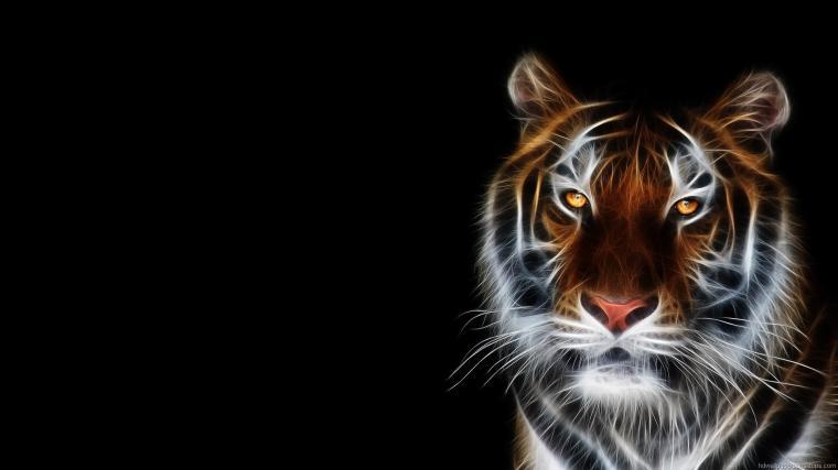 Animals Widescreen Desktop Backgrounds Photos Wallpapers