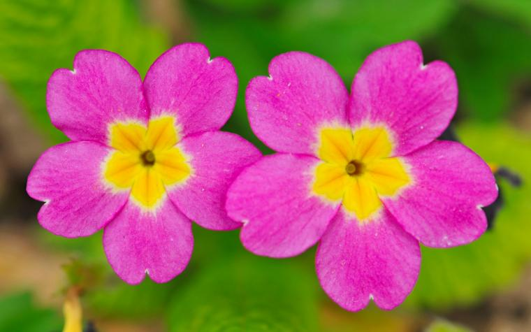 two small cute flowers 1680x1050 Wallpaper