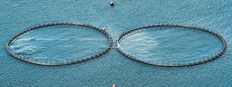 Aquaculture   Natural nutrition ingredients in aquaculture ponds