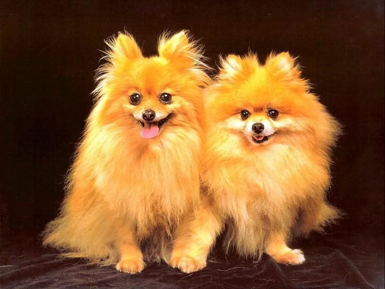 Cute Dog Wallpaper   Dogs Wallpaper 13936305