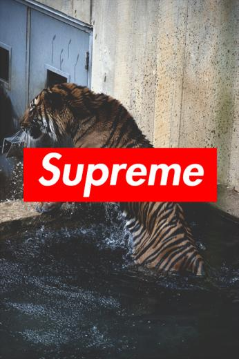 supreme iphone wallpaper Tumblr