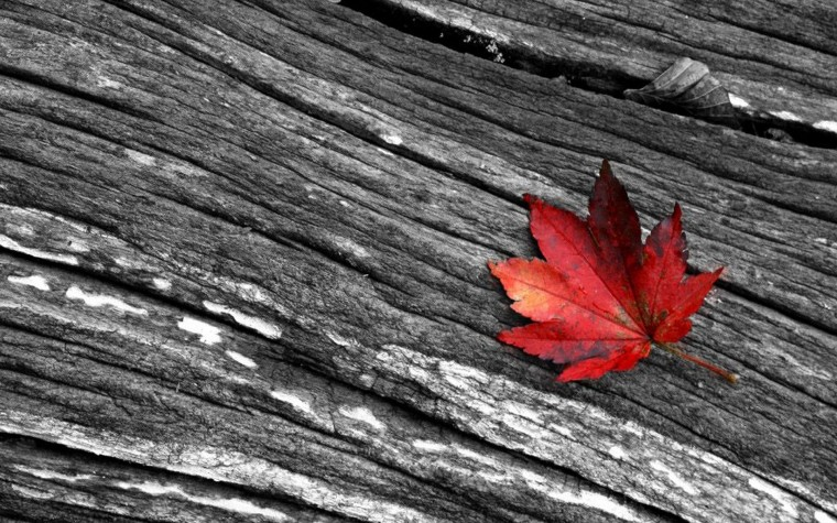 Leaves Black And White Photography Wallpaper