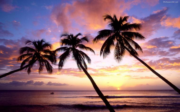 Palm Tree Sunset Wallpaper Images amp Pictures   Becuo