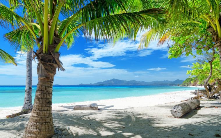 comtempting ocean beach with palm trees hd desktop wallpaperhtml
