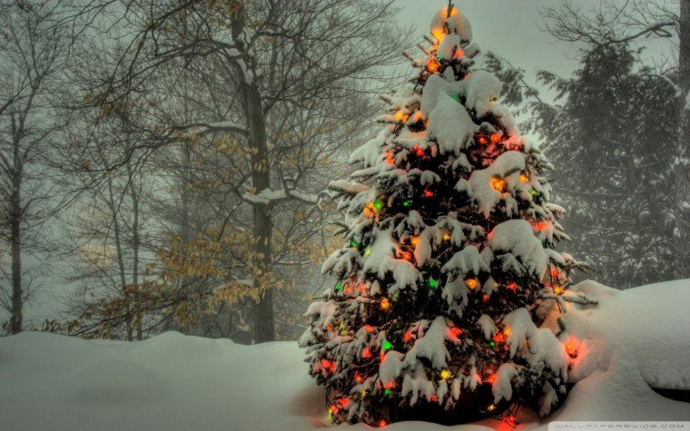 Awesome Galleries 33 Beautiful christmas tree Wallpaper