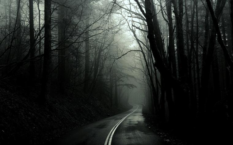 black and white trees dark forest roads monochrome 1920x1200 wallpaper