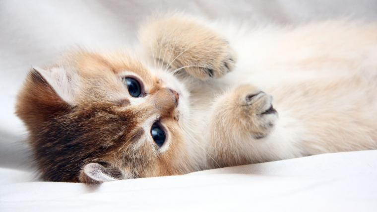 Download Wallpaper 2048x1152 Cat Kitten Cute Foot Face HD HD