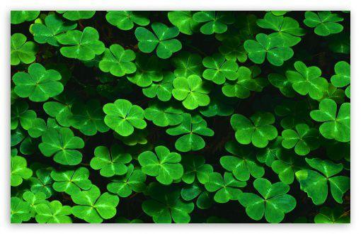 wallpapers black wallpapers wallpaper pictures backgrounds Clover