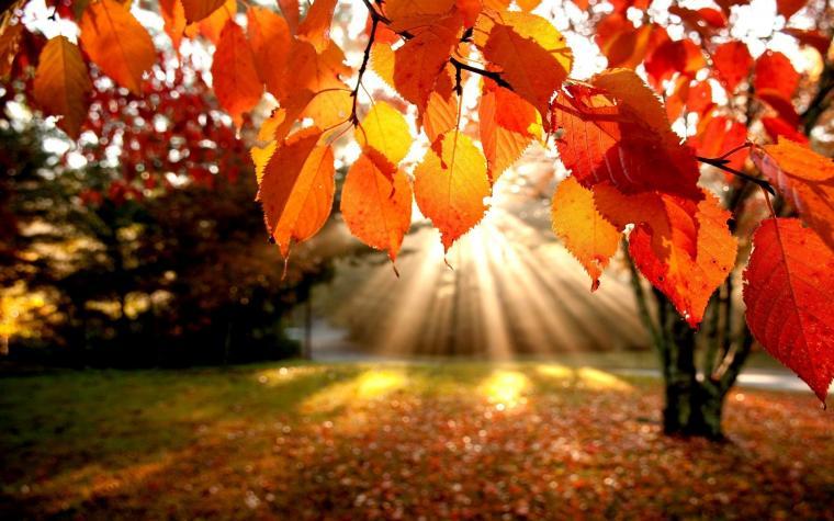 Fall Leaves Wallpapers for Desktop wallpaper Fall Leaves Wallpapers