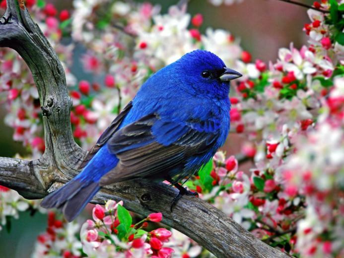 bird wallpaper bird parrot wallpapers bird wallpaper blue bird