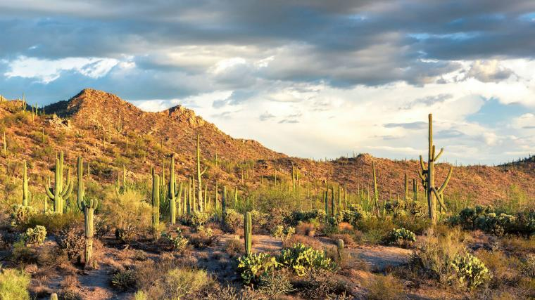 Saguaro National Park Rincon Mountain District Weedwackers
