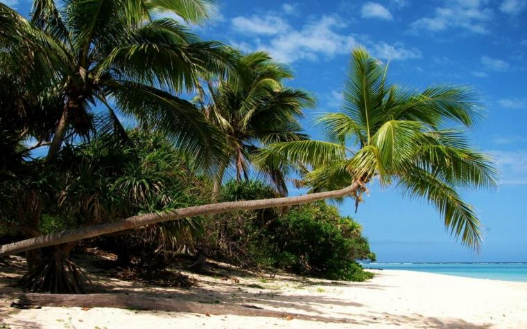 Beach With Palm Trees 2560x1600 Hd Wallpaper Beach With