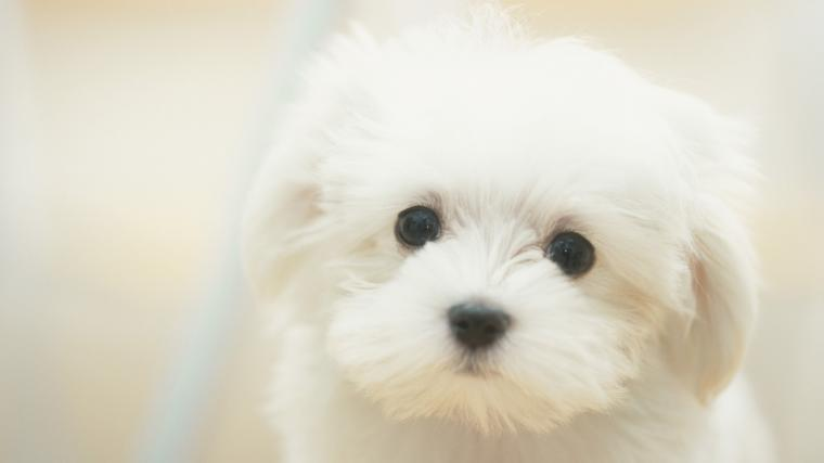 Cute Puppy Wallpaper Wallpapers Gallery