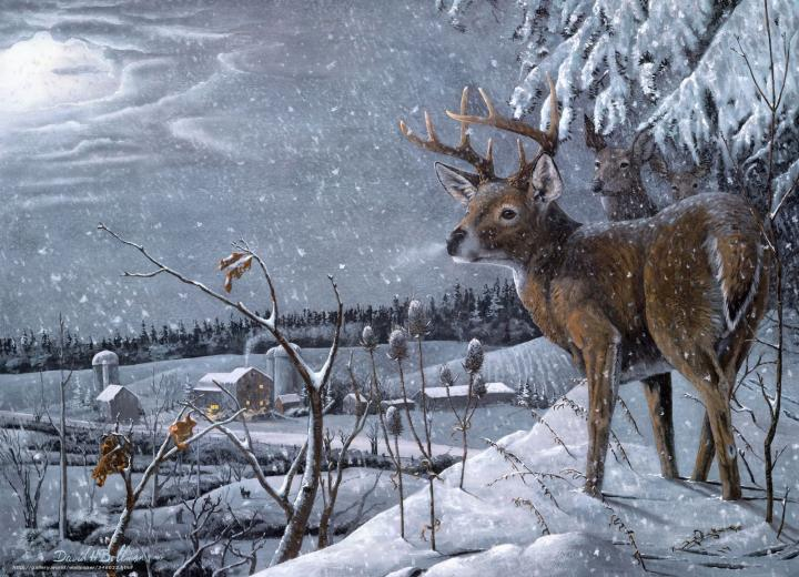 wallpaper david h bollman Deer Winter snow desktop wallpaper