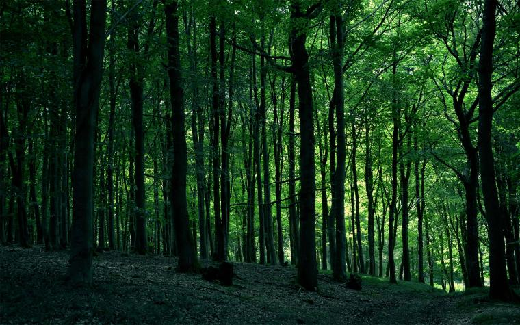 Name 743020 2560x1600 Awesome Trees Browser Themes Desktop Picture