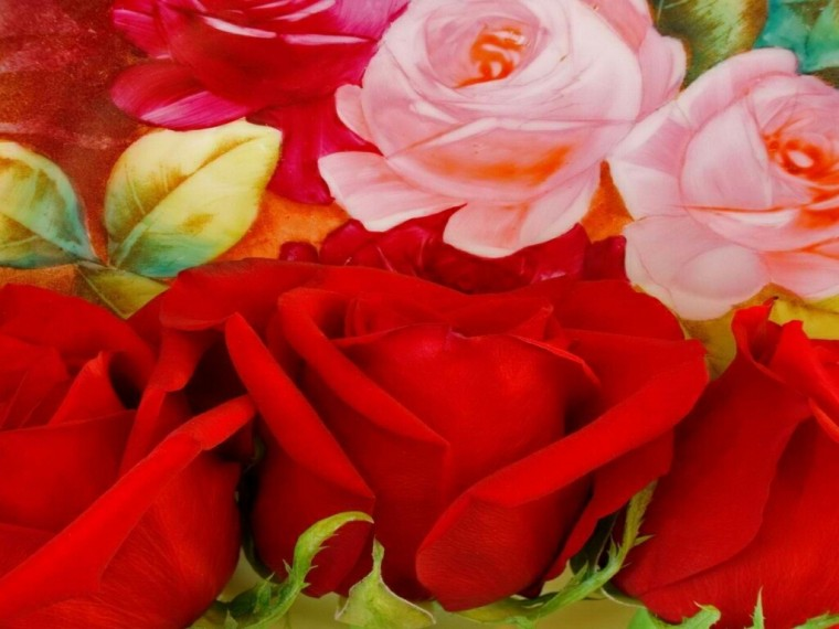 flowers for flower lovers Beautiful Rose Flowers wallpapers