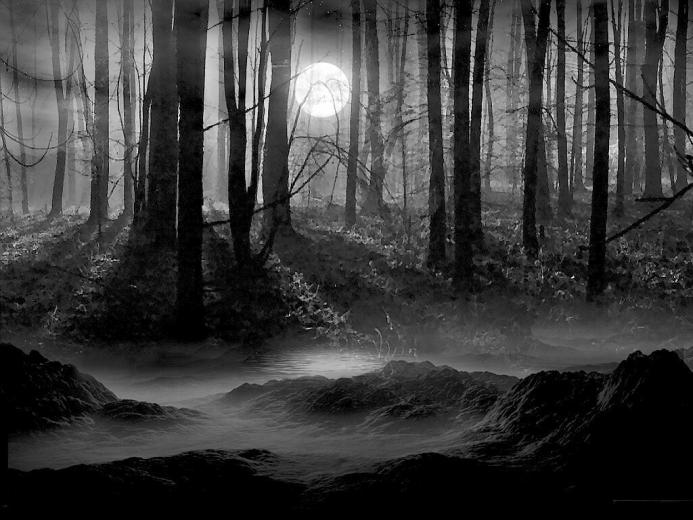 Forest Background Black and White wallpaper wallpaper hd