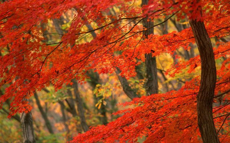 fall of autumn leaves desktop wallpaper fall of autumn leaves desktop