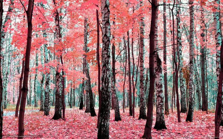 Download wallpaper autumn trees park Birch desktop wallpaper