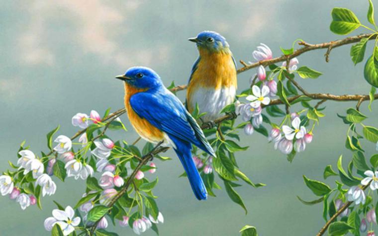 desktop all images of birds wallpaper