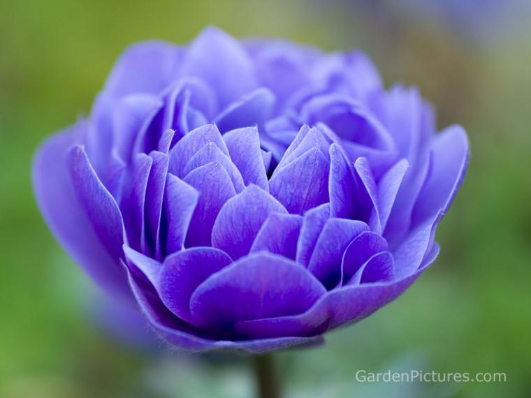 All photos gallery flower wallpaper flowers