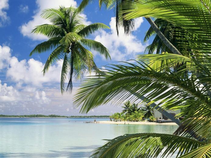 download Florida beach nature wallpaper in 1600x1200 resolution
