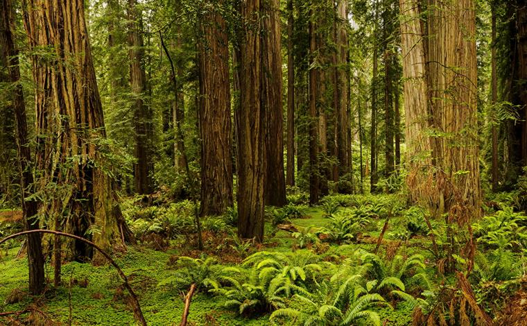 Images California USA Redwood National And State Parks Nature
