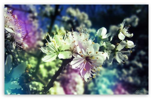 Colorful Spring HD wallpaper for Wide 1610 53 Widescreen WHXGA WQXGA