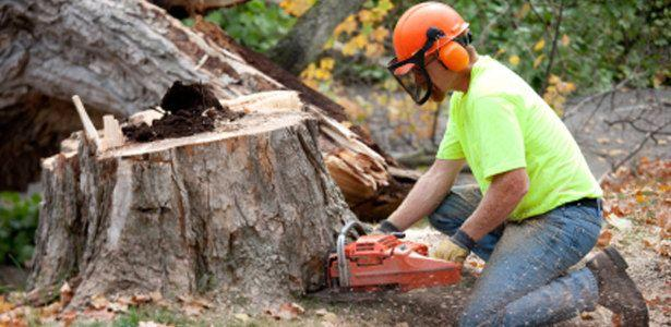 Related to Toronto Tree Removal service company Ontario stump root