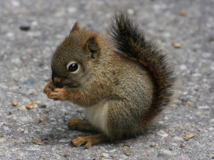 Desktop Wallpapers Baby Squirrel Cute Animal Wallpaper   iWallScreen
