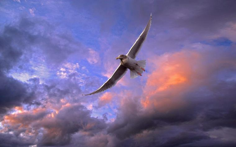 Wonderful Flying Bird Wallpaper 1920x1200