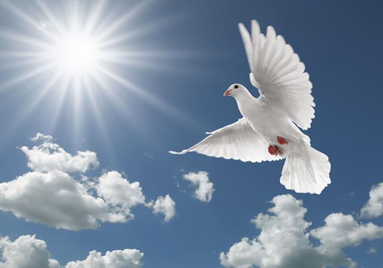 Flying Birds Wallpapers   HD wallpapers n birds Dove flying