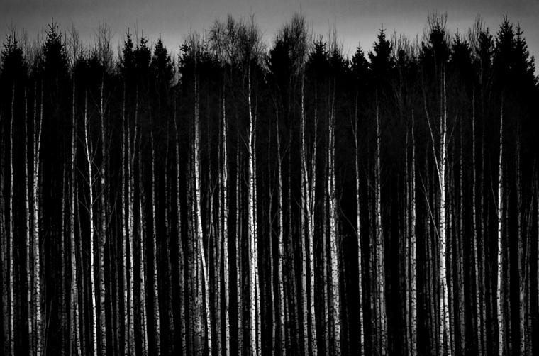 Black And White Pictures Anime Forest 12 Hd Wallpaper