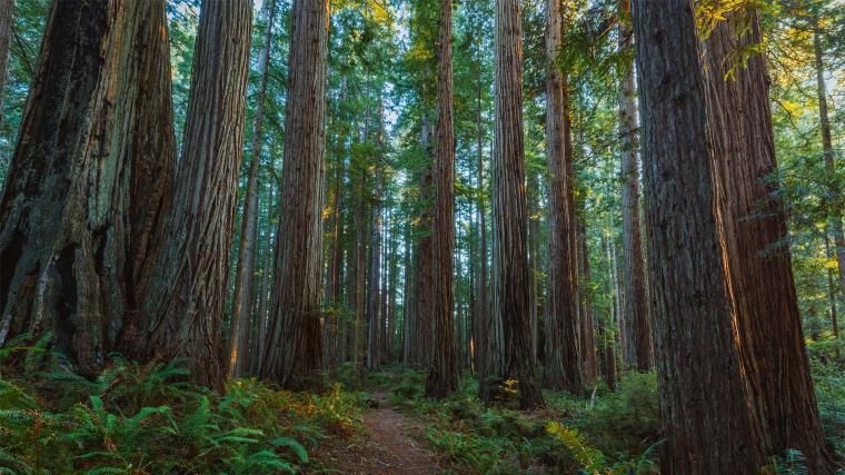 Prairie Creek Redwoods State Park   Wikipedia