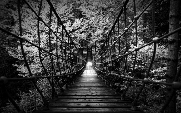black white bw landscapes nature wood rope scary bridges trees forest