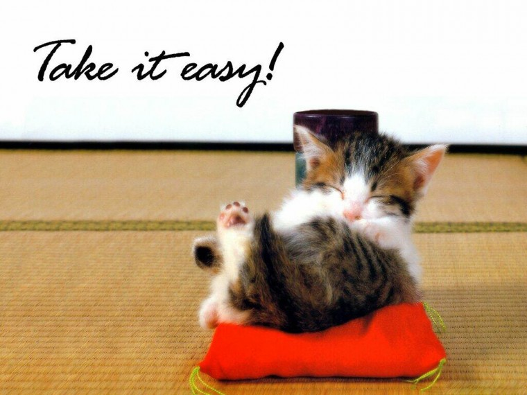 Tag Funny Pets Wallpapers Images Photos Pictures and Backgrounds
