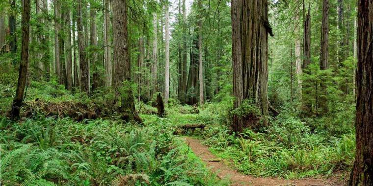Spotlight Redwood National State Parks Visit California