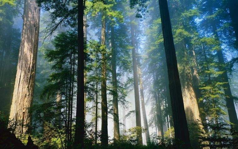 55 Redwood National Park Wallpapers   Download at WallpaperBro