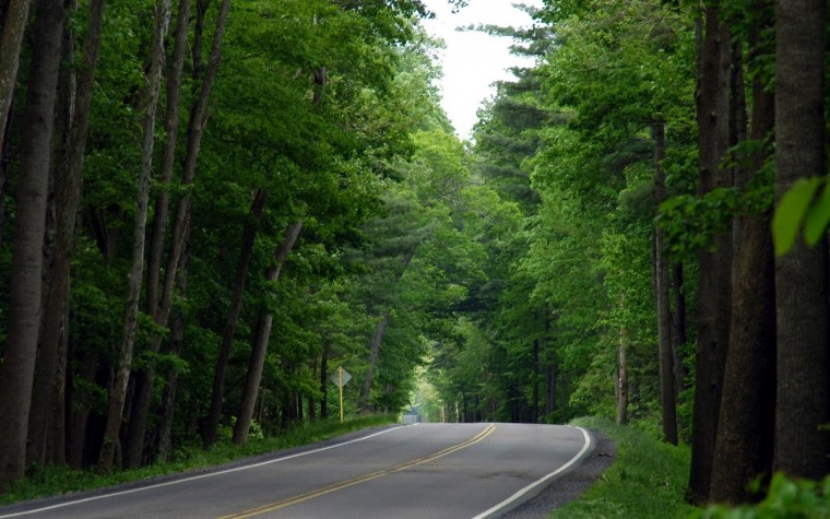 Jungle Road Nature Wallpapers HD Widescreen Full Size HD Wallpapers