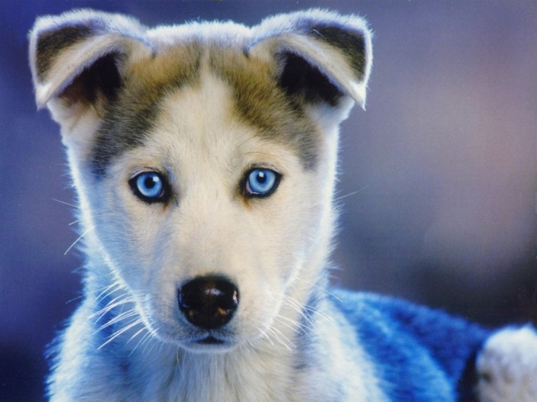 Cute Puppy Backgrounds