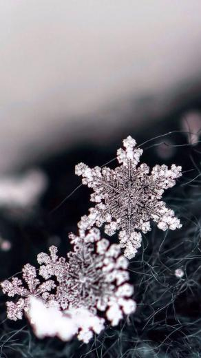 Black and white macro image of snowflakes iOS8 HD wallpaper for